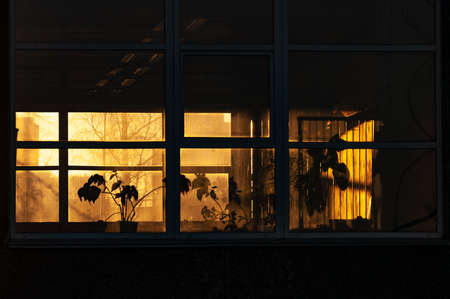 Silhouettes of domestic plants in the rays of the setting sun
