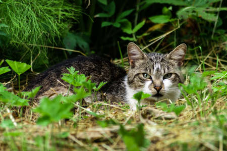 portrait of a young cat among the grass. High quality photo