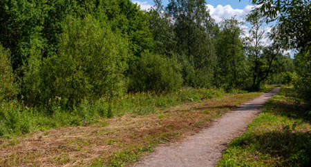 footpath in the park. Summer Day. High quality photo