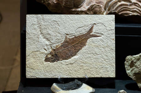 fossilized remains of fossilized fish. High quality photo Фото со стока