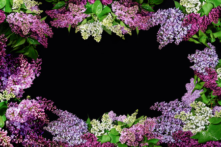 Lilac twigs of different colors framing the frame with copy space.Floral design for greetings and gifts