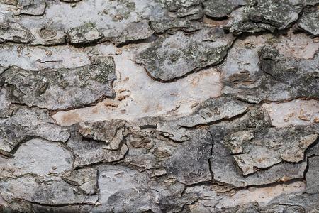 Apple Tree Bark Texture 免版税图像