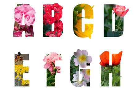 Czcionka kwiatowa Alfabet a, b, c, d, e, f, g, h wykonana z żywych kwiatów z cennym wyciętym kształtem litery. Kolekcja genialnych czcionek florystycznych do wyjątkowej dekoracji na wiosnę, pomysł na koncepcję Zdjęcie Seryjne