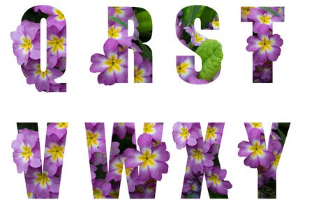 Flower font Alphabet q r s t v w x y made of Real alive flowers with Precious paper cut shape of letter. Collection of brilliant flora font for your unique decoration in spring, many concept idea