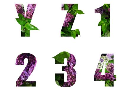 Flower font Alphabet y,z 1,2,3,4 made of Real alive flowers with Precious paper cut shape of letter. Collection of brilliant flora font for your unique decoration in spring, summer many concept idea
