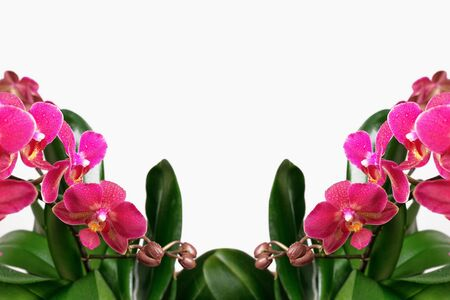 Floral frame of pink orchid flowers on a white background