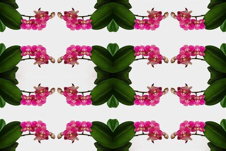 Phalaenopsis orchid flowers pattern on white background