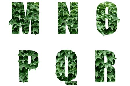 Letters of the alphabet M N O P Q R made from green leaves.Leaf alphabet. Banco de Imagens