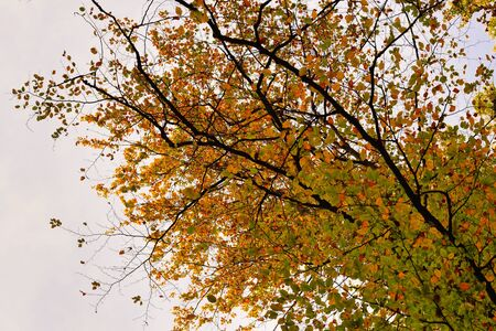 Collection of Beautiful Colorful Autumn Leaves  green, yellow, orange, red