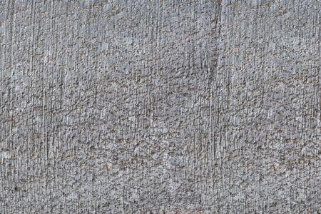 Tree bark texture.Gray beech trunk bark texture