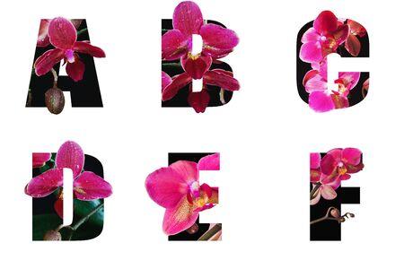Czcionka kwiatowa Alfabet a, b, c, d, e, f wykonana z żywych kwiatów z wyciętym z papieru cennym kształtem litery. Kolekcja genialnych czcionek flory do wyjątkowej dekoracji na wiosnę, latem wiele pomysłów na koncepcję Zdjęcie Seryjne