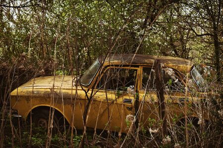 Old rusty abandoned car in a thicket of bushes and trees