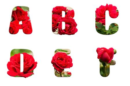 high resolution alphabet letter A B C D E F made from red rose isolated on a white background
