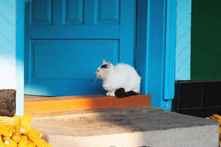 White cat sits on the doorstep of an old village house 스톡 콘텐츠