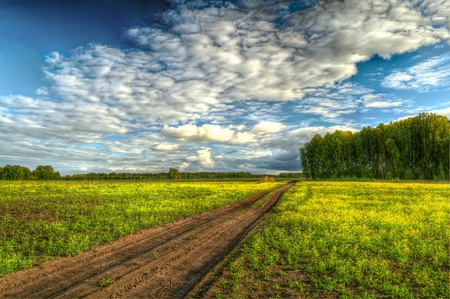 Image of straight dirt road through the yellow field to the green forest under the cloud  photo