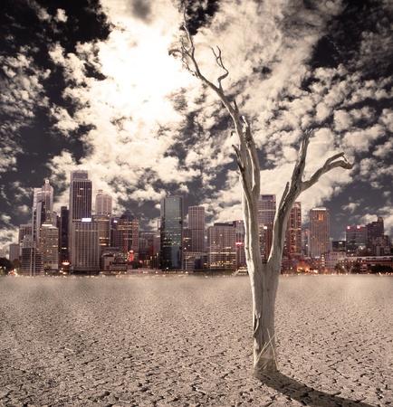 turismo ecologico: Árbol del Desierto Foto de archivo