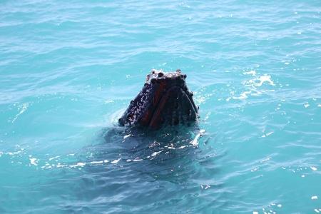 flukes: Humpback Whale in Australia (Whitsundays Islands) Stock Photo
