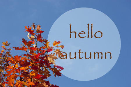 Red leaves on autumn tree. Hello autumn lettering text. Beautiful autumn greeting card.