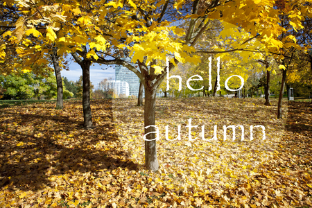 Yellow leaves on autumn tree. Hello autumn lettering text. Beautiful autumn greeting card.