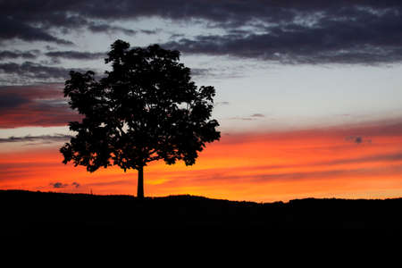 Tree during sunset pr sunrise. Tree silhouette alone in the nature, hiking concept