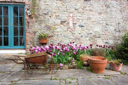 庭のチューリップとオレンジ色の花鍋や手押し車