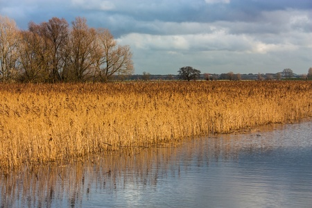 floodplain: Floodplain with reed and banks against cloudy blue sky Stock Photo
