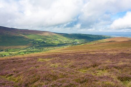 Heathlands and a Valley in Wicklow Mountains