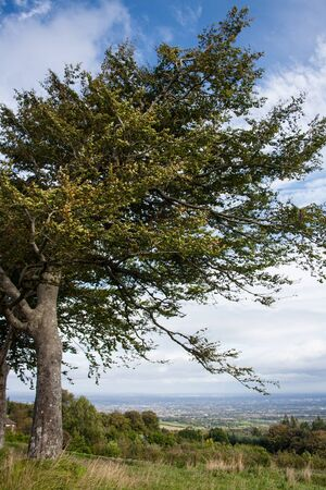 woody bay: Tree on a hillside overlooking the city