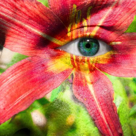 carpels: Face with blue eye and painted hybrid Daylily Stock Photo