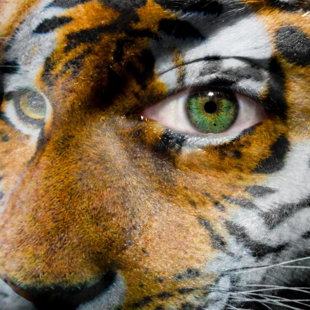 tiger eyes: Face with green eye painted with siberian tiger