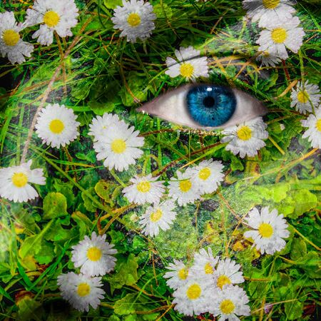 oxeye: Face with blue eye and painted oxeye daisy