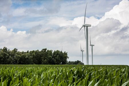 Three wind turbines in a corn field located in the netherlands photo