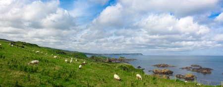 northern ireland: Sheep on a hill in Ballintoy in Northern Ireland with a view of vulcanic rock and the atlantic ocean