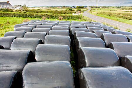 Circulaire balen hooi gewikkeld in zwart gekleurd plastic opgeslagen voor later gebruik