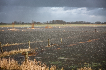 cloudburst: Heavy rainfall flooding  a farm field used as floodplain in the Netherlands
