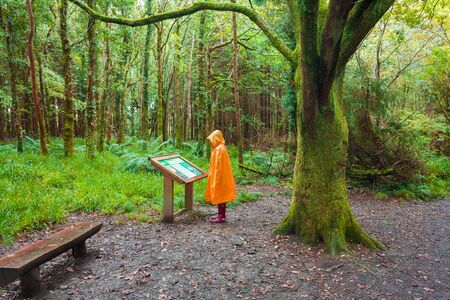 Hiker in the rain looking at description sigh in the  forest on a rainy day wearing a yellow raincoat and red rubber  wellington boots photo