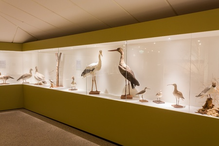 Stuffed birds on display in a museum