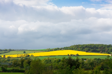 Large rapeseed field in Wicklow Ireland photo