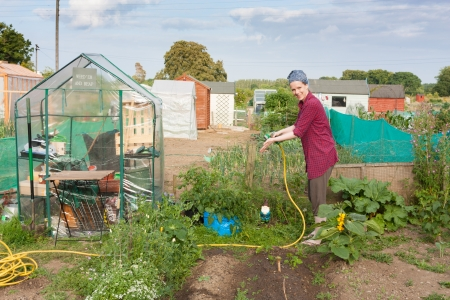 communal: Woman working in an allotment in a suburb in Dublin Ireland