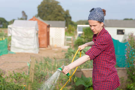 allotment: Young woman sprinkling water in an allotment