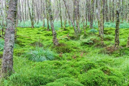 carex: Alder forest with carex and moss Stock Photo