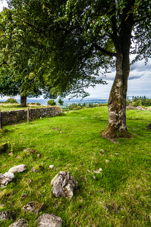 Beautiful tree in an Idyllic landscape in Ireland where nature meets man-made photo