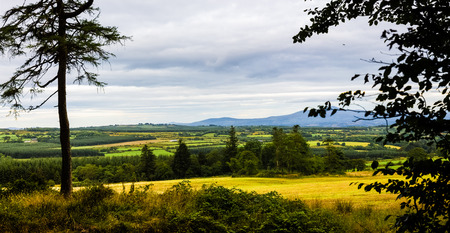 Panorama of the colourful Irish country side as seen through the trees photo