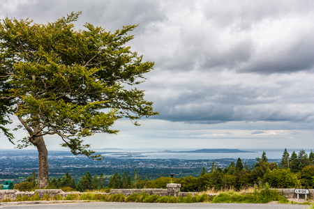 woody bay: Tree on a hillside overlooking the Dublin Bay and Howth