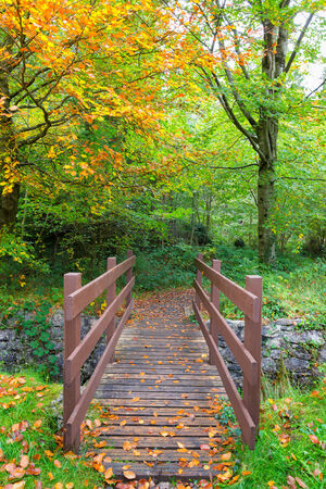 Brown wooden bridge leading into the forest with autumn colors photo