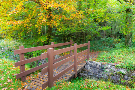 Wooden brown bridge leading into the forest with fall colors photo