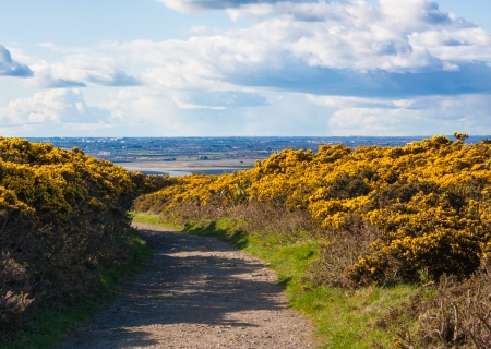 pea shrub: Hike trail on Howth cliffs with a view of Howth on a sunny day