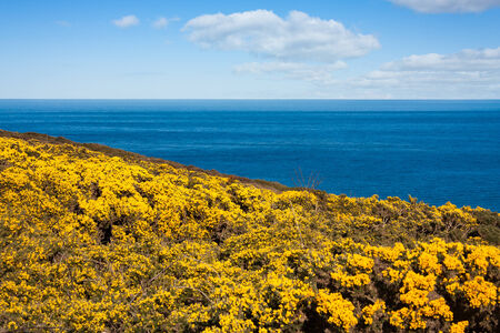 Yellow flowers on howth cliffs in ireland against a cloudy deep stock photo yellow flowers on howth cliffs in ireland against a cloudy deep blue sky mightylinksfo