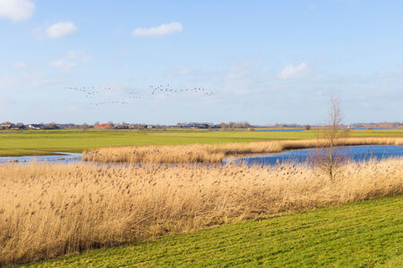 floodplain: Floodplain with reed and banks in Harculo in The Netherlands Stock Photo