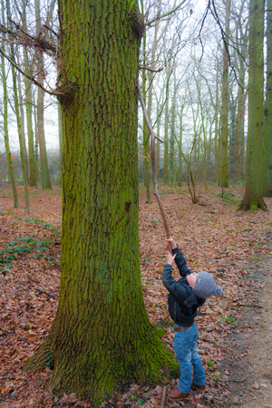 heights: Little boy reaching for heights with a branch on a winter day